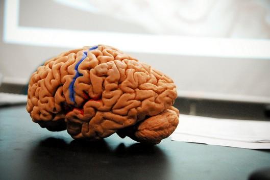 neuroscienze-mente